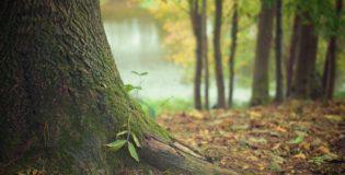 Prześliczny oraz {miły dla oczu ogród to nie lada wyzwanie, w szczególności jak jego pielęgnacją zajmujemy się sami.